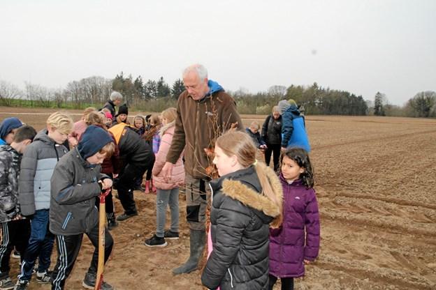 Skovfoged Per Hyttel hjælper børnene fra Brovst Skole med at plante træer. Foto: Flemming Dahl Jensen Flemming Dahl Jensen