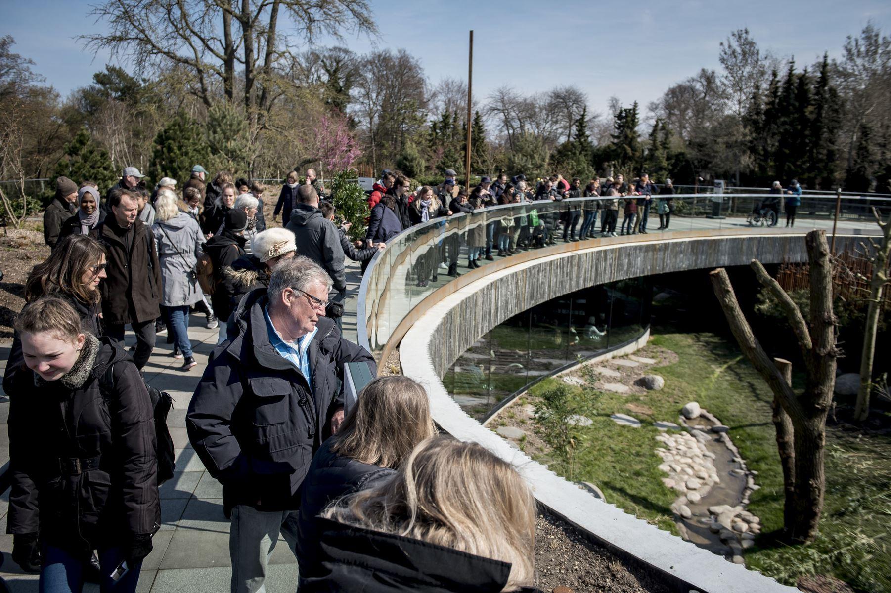 Der har været ekstra mange gæster i Zoologisk Have i København i påsken, efter at pandaerne er flyttet ind.