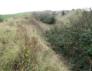 Markfirben har stoppet lergrav: Imerys vil stadig grave i Stærhøj