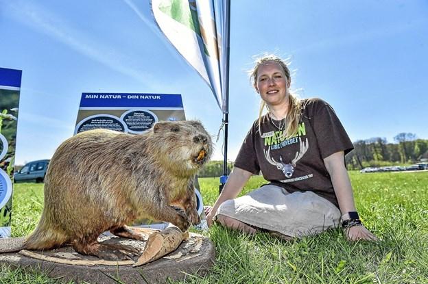 Projektleder Anna G. Worm og nationalparkens frivillige var også med ved Skovens Dag. Anna G. Worm ville gerne i kontakt med lodsejere der vil være med til at skabe ny natur i nationalparken. - Der er penge til det. Nationalparkens nye dyr bæveren var vist frem. Foto: Ole Iversen