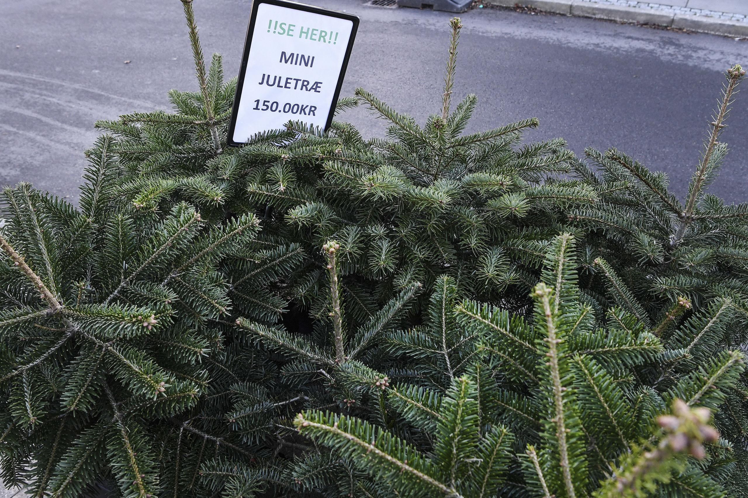 Vil du holde dit træ friskt og grønt så længe så muligt, så lad det stå vådt og koldt udenfor, til du skal bruge det. Arkivfoto: Bent Bach