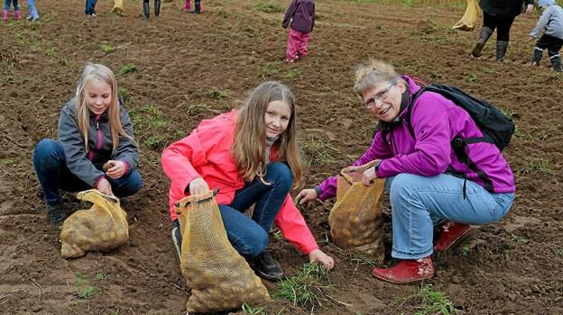 Straks efter åbningen styrter børn og voksne ud på den 1 tønde land store mark med kartofler for at sikre sig de eftertragtede økologiske kartofler. Foto: Niels Helver