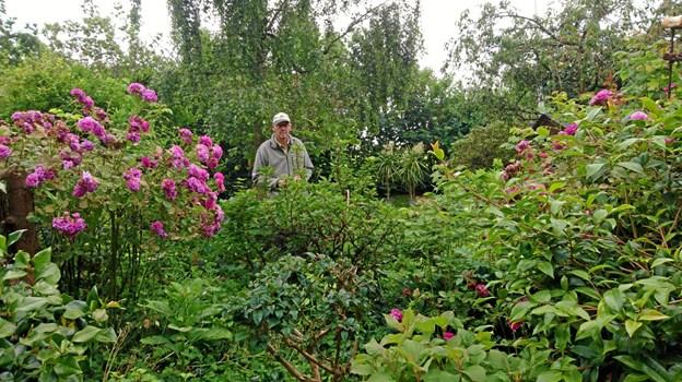 Ikke kun palmer har Ole Pedersens interesse, som det ses i den store have. De to palmer skimtes her bagerst i haven.
