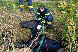 Efter redningsaktion i vandløb: Nu er Bella død