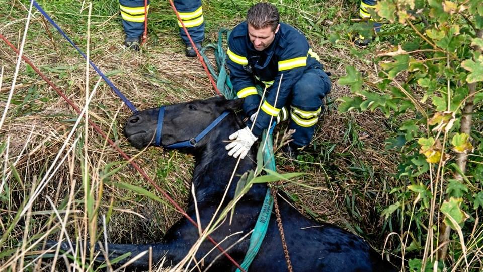 Beredskabsfolk fik søndag trukket Bella op fra vandløbet. Men nu er hesten død.  Foto: Jan H. Pedersen