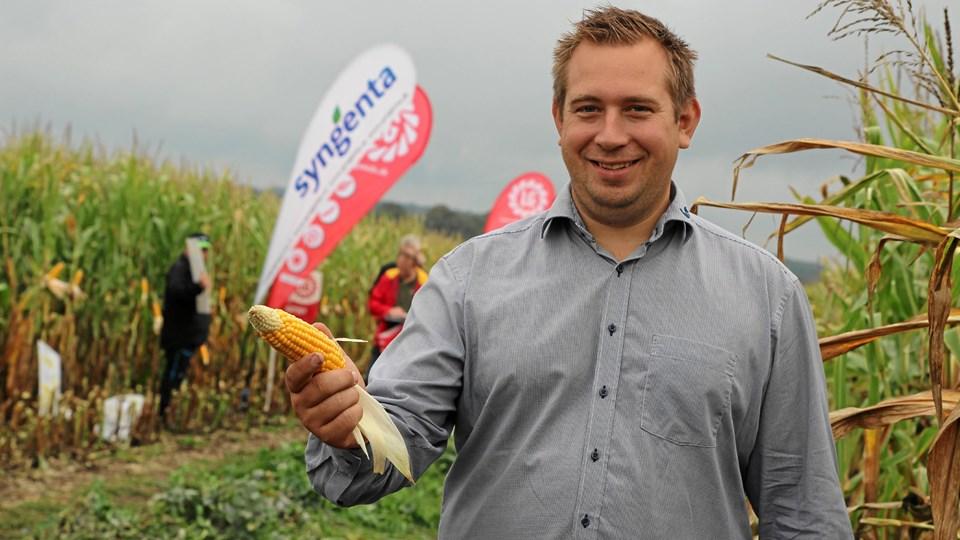 I sommer frygtede man, at tørken ville forhindre majsen i at sætte kolber. Nu er majsen klar til høst, og de fleste er med kolber, siger planteavlskonsulent Anders Spanggaard Christensen fra Agri Nord.Privatfoto