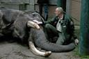 Husker du elefanten Tempo? Se den rørende video med dyrepassernes afsked
