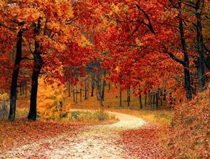 Lav kvalitetsflis til skoven