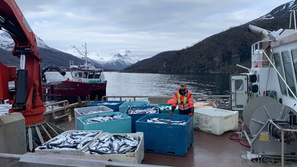 Flere hundredtusind laks bliver evakueret i det nordlige Norge. (Arkivfoto)