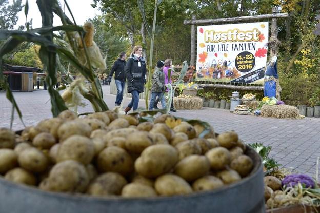 Der er høstfest i efterårsferien i Fårup Sommerland.  Foto: Bente Poder