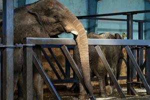 Knuthenborg: Vi har masser af plads til cirkuselefanter