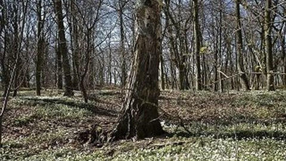 Skovbegravelse på pladsen i Sæbygaard Skov. Foto: Peter Broen