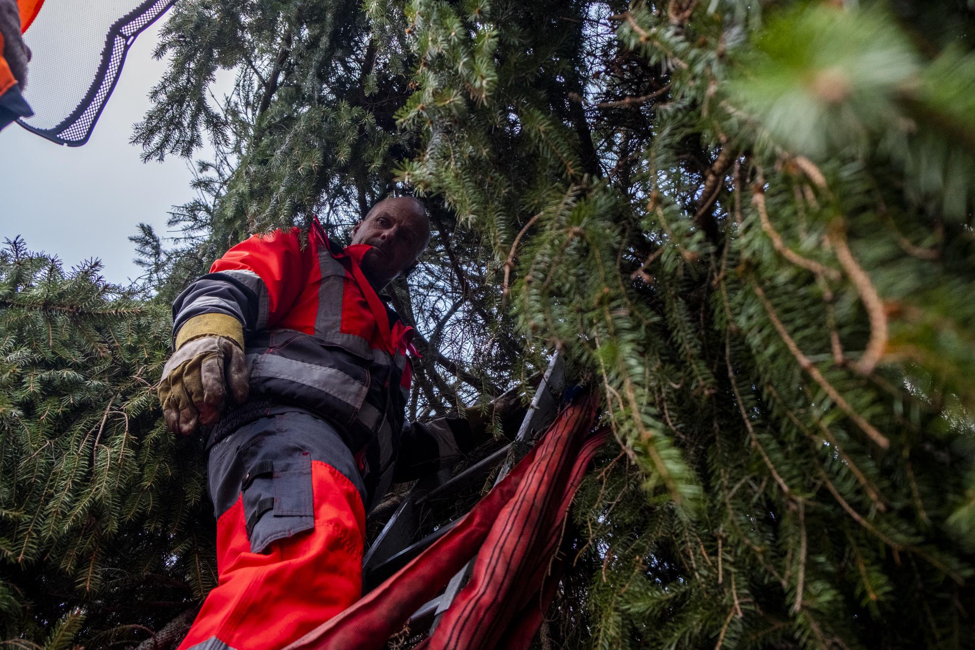 En række folk fra Aalborg Kommune deltog i opsætningen af juletræet. Foto: Lasse Sand