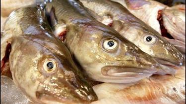 Det lugter af penge: Nordjysk fiskevirksomhed buldrer fremad