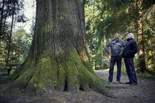 Skov-skriverne Helge og Helge: Træer er deres fælles passion