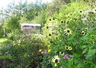 Udflugt  til åbne haver i Saltum Det sker: Tirsdag aften inviterer Jammerbugt Havekreds til arrangement.