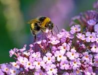 Mariagerfjord vil også være biernes kommune