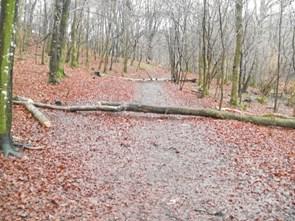 Blæsevejr gør det svært at færdes i Lundby Bakker