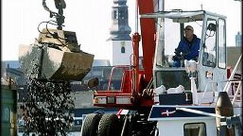 Muslingeindustrien lider i disse år hårdt under mangel på råvarer.Arkivfoto: Per Kolind