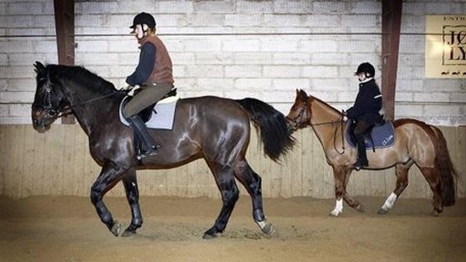 Skagen Rideklubs heste har stadig tag over hovedet. Men det trænger - og har i nogen tid trængt - voldsomt til at blive skiftet, og nu vil fonden, der ejer ridehuset, have sat skub i renoveringssagen, som strandede i den gamle Skagen Kommune. Arkivfoto: Peter Broen