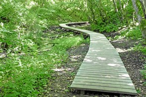 15 skønne pletter: Naturkanon svinger uden om Hjørring kommune