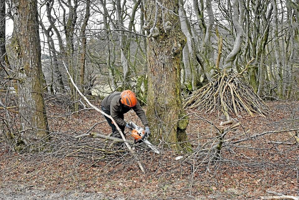 Skovarbejderne har travlt med at tynde udi den eksisterende skov, så der bliver mere luft mellem træerne. Foto: Niels Helver