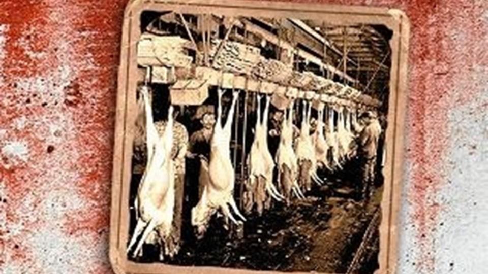 Sinclairs klassiker fra 1906 om de kæmpemæssige Chicago-slagteriers grove udnyttelse af indvandrerne bliver nu genudgivet.