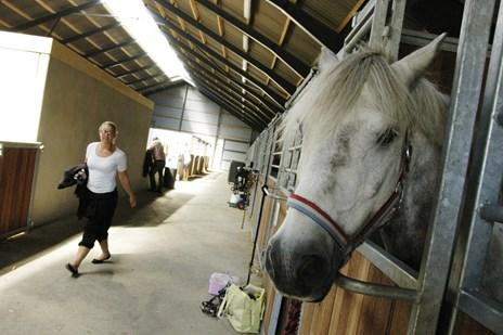 Rideklub isoleret: Frygter herpesudbrud