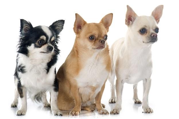 20-30 hunde i ubeboet hus: Det lugtede fælt af afføring