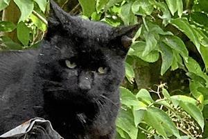 Sort vilddyr terroriserer bydel: Katte og mennesker bliver bidt og kradset
