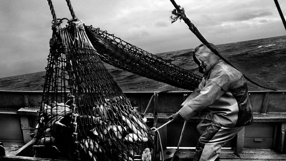 Tage Nielsen, Torskefiskeri Foto: Scanpix/Rune Feldt