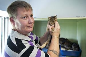 Overskud af katte hos Kattens Værn
