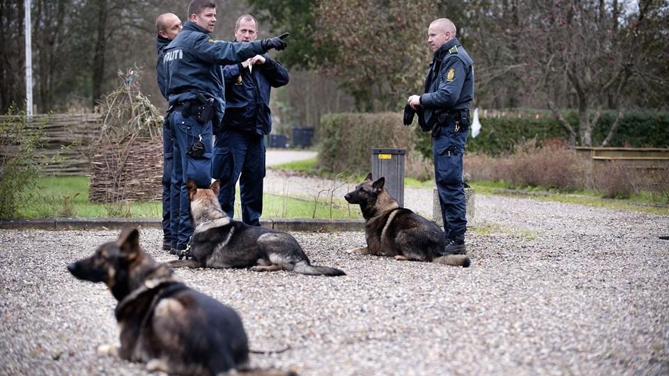 Politihundene bruges stadig mere i eftersøgninger og undersøgelser af gerningssteder.Arkivfoto