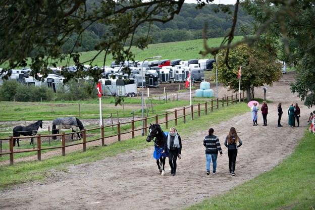 144 ekvipager betyder rigtig mange ekstra hestetrailere - der lige som hestene blev opstaldet. Foto: Hans Ravn