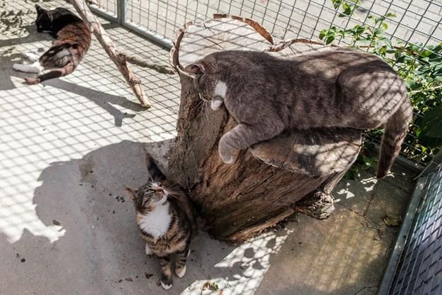 Der er meget at lave hos Kattens Værn, så internatet har tit praktikanter og folk i samfundstjeneste, der giver en hånd med. Foto: Lasse Sand