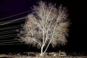 Styrkeprøve: Her er kunst om miljø, klima og omgivelser