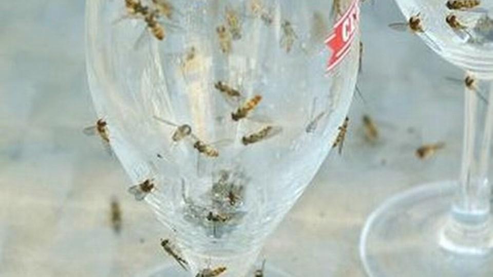 Fluer kan være en plage - om det er spyfluer eller svirrefluer. Arkivfoto: Kurt Bering