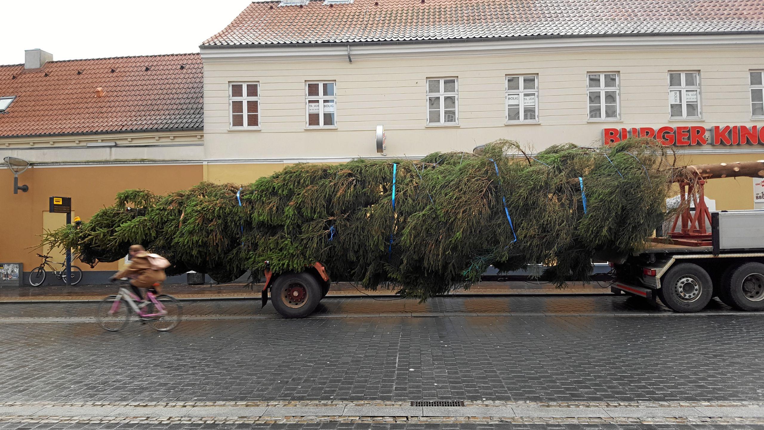 Juletræet fra Fredrikstad på Østerbro - og et eksempel på et af de billeder, arkivet fik ind via Instagram i 2016. Foto: Mia Nielsen