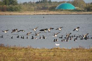 Strid om fredet fugl - øsamfund på vej til at sagsøge staten