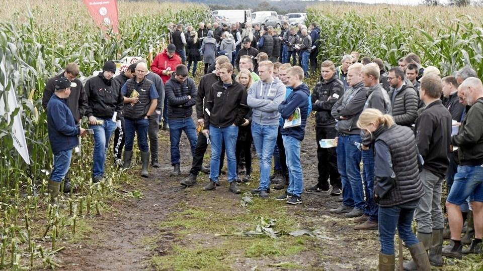 Der var trængsel i Agri Nord forsøgsmarker i Himmerland. Omkring 150 landmænd kiggede forbi. Foto: Agri Nord