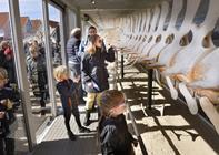 Blokhus-hvalen er taget på sommerferie