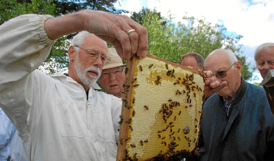 Lær mere om bierne - og blomsterne