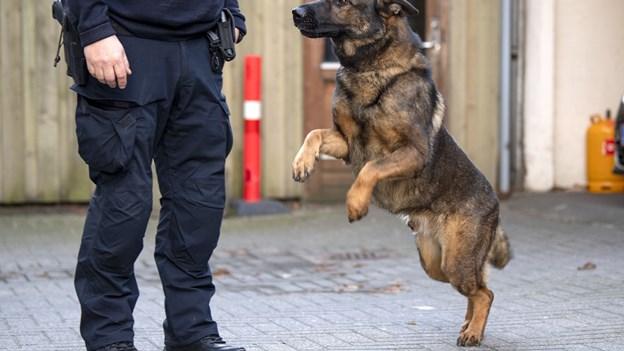 Politihund nappede to tyve som forsøgte at stikke af med en plæneklipper