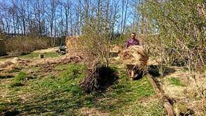 Arbejdsdag i Ingstrup Spiselige Skovhave