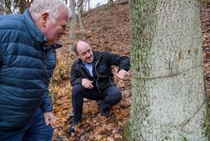 –  Svineri: Egetræer stod i vejen for fjordudsigt på Mors - nu er de slået ihjel med gift