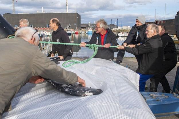 Pukkelhval er gået i nettet i Skagen i fisker Troels Tviullings garn. Foto: Henrik Bo