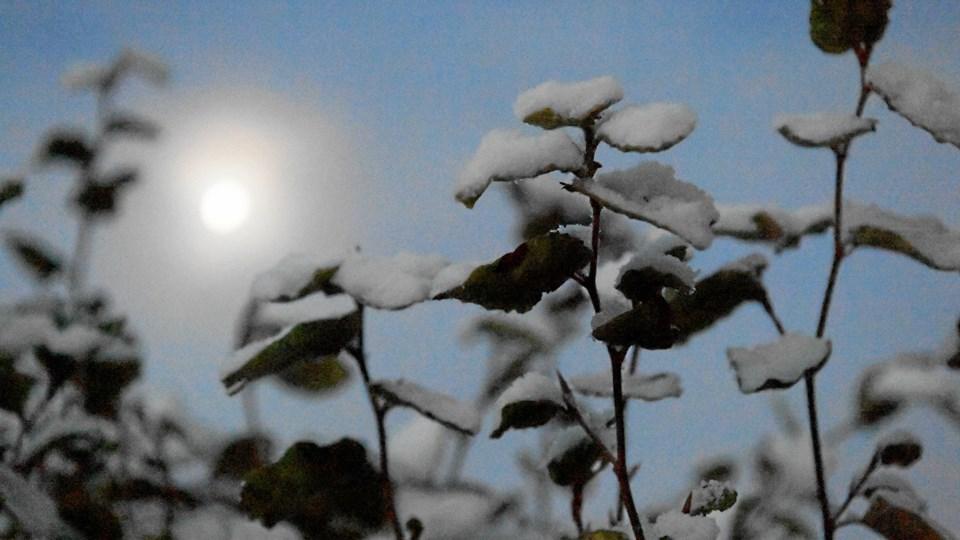 Der kan komme et par centimeters sne sidst på ugen - og Nordjylland får mest, lyder forudsigelsen fra DMI. Foto: Michael Koch