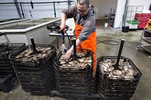 Næse på vej til fiskeriminister for nøl med østers