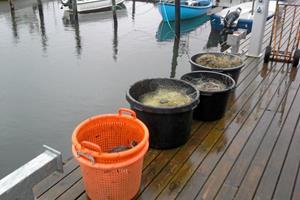 Haves: Ni ulovlige garn, dagens fangst af fisk og en enkelt and