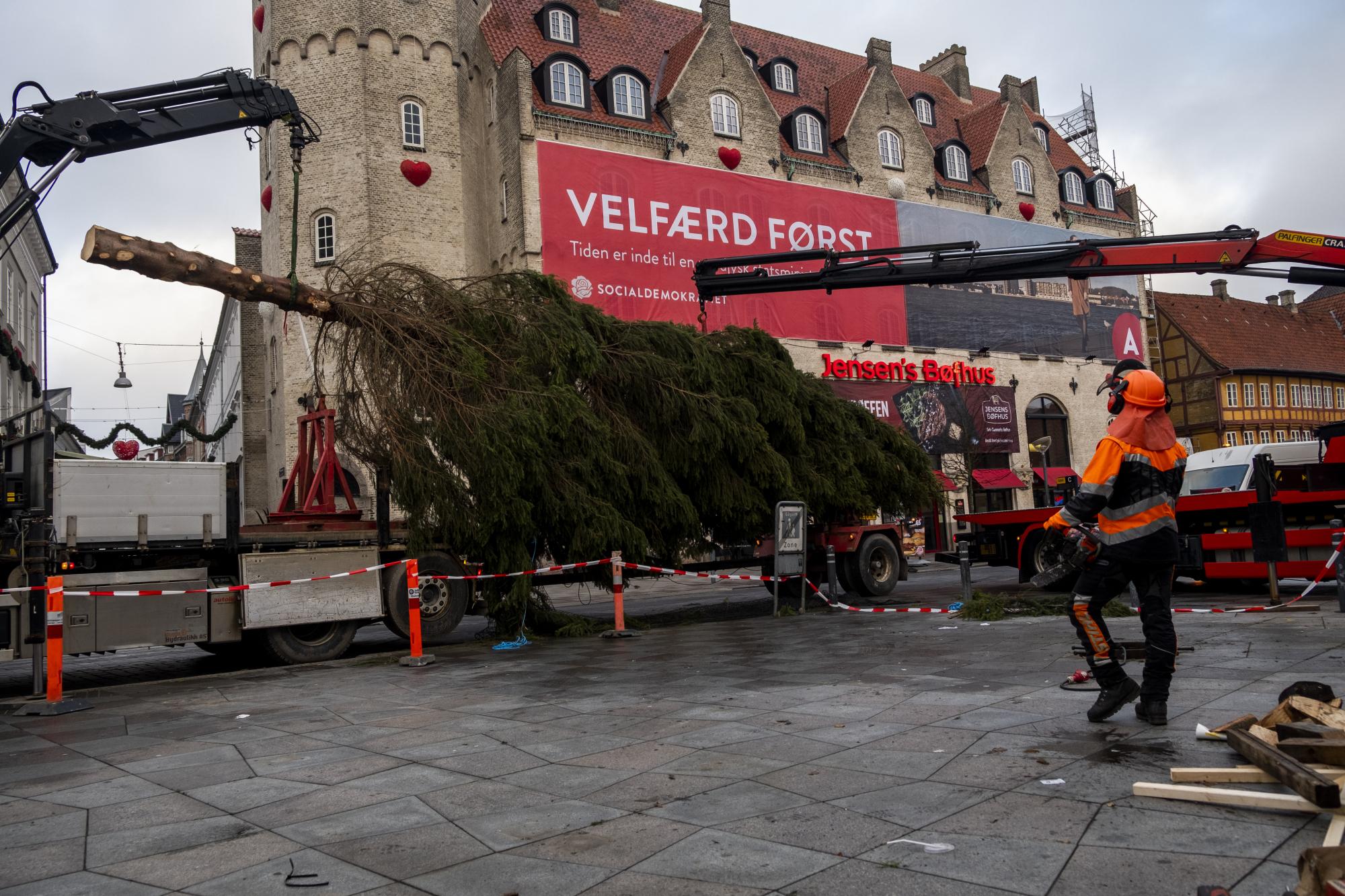 Årets juletræ fra Frederikstad er 17 meter højt. Foto: Lasse Sand